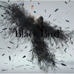 Aimer「Black Bird」