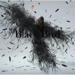 Aimer「Black Bird」