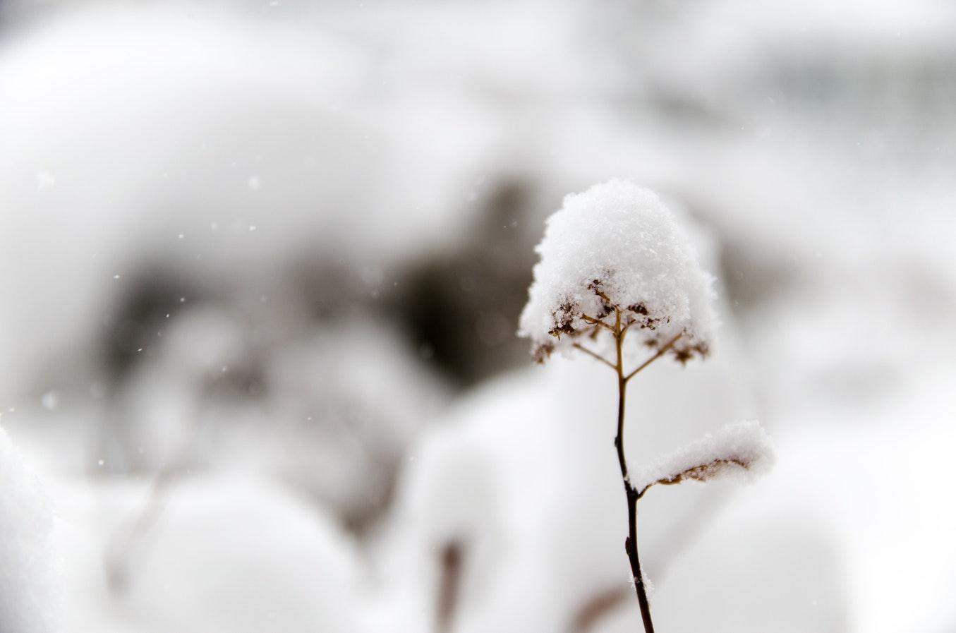 宮本 浩次 冬 の 花